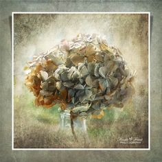 Hydrangea by Kerstin Frank art, via Flickr