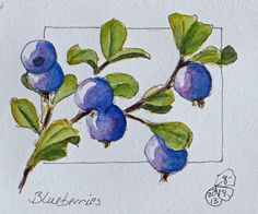 "From ""Creating in Alaska"" by Suzie Althens. I like the way she framed the berries."