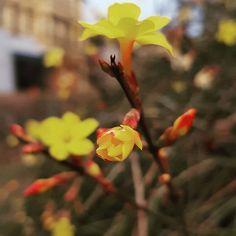 #spring Spring, Plants, Instagram, Plant, Planets