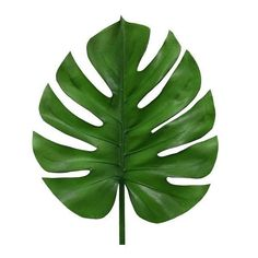 What fun that decoration branches of HK Living! So you always have green in your home and you can also just really forgot to water the plants. Decoration Branches, Branch Decor, Foto Transfer, Leaf Template, Flower Template, Snake Plant, Leaf Art, Tropical Leaves, Paper Flowers