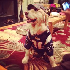 Patriots fan! i would totally do this if i had a dog. If my brother lets me I'll dress his.