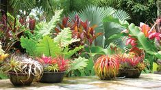 Beginner's Guide To Tropical Landscaping Design Plans – My Best Rock Landscaping Ideas Tropical Garden Design, Tropical Backyard, Tropical Landscaping, Landscaping With Rocks, Backyard Landscaping, Landscaping Ideas, Tropical Flowers, Tropical Plants, Tropical Gardens