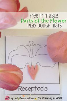 Free PRINTABLE Parts of the Flower play dough mats for Learning 2 Walk