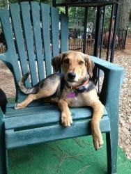 Barnaby Jones is an adoptable Airedale Terrier Dog in Glastonbury, CT. Please contact Peggy ( thechisociety@gmail.com ) for more information about this pet. Meet the coolest pup on petfinder! We can...