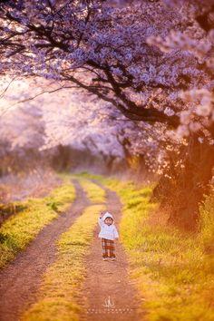 No.1 by Kenji Yamamura on 500px April Spring 2015, Japan