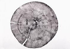 Rock Canyon Pine with tree rings. Old growth pine wood print