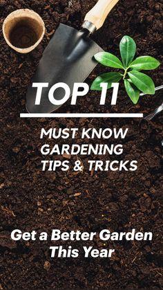 #WartsOnHands Outdoor Plants, Garden Plants, Outdoor Gardens, Planting Vegetables, Growing Vegetables, Veggies, Garden Projects, Garden Tools, Flower Beds