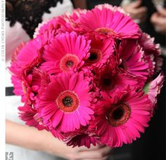 Pink daisies. My favorite flower in my favorite color. Couldn't get much prettier than these