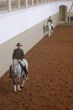 Spanish Riding School <3
