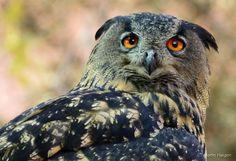 10 South African birds of prey