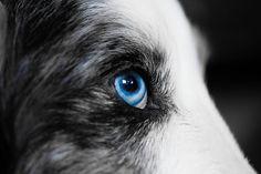Comment les chiens perçoivent-ils le monde ? Quelles sont les caractéristiques de la vision du chien ? Sont-ils mieux dotés que nous les humains ?