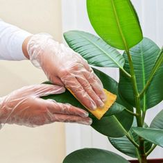 5 Tips για να κρατήσεις τα φυτά σου υγιή το χειμώνα! | ediva.gr Decoration Design, Holding Hands, Knowledge, Tips, Gardening, Cleaning, Advice, Lawn And Garden, Home Cleaning