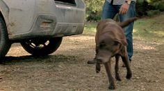 Subaru 2013 XV Crosstrek commercial - Best Friend