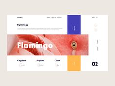 Animalia designed by Giga Tamarashvili. Connect with them on Dribbble; the global community for designers and creative professionals. Modern Web Design, Best Web Design, Page Design, Layout Design, Print Design, Graphic Design, Web Design Inspiration, Creative Inspiration, Pag Web