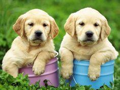 Las 10 Razas de Perros   Recomendadas