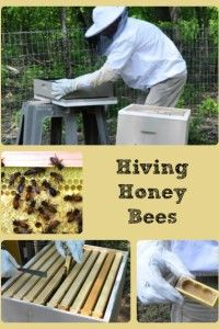 Hiving Honey Bees- has many links to various blog posts