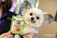 Norbert takes PEOPLE on a tour of his life as a therapy dog at the Children's Hospital Los Angeles