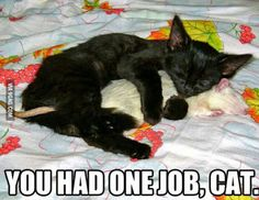 One Job, Cat.....