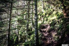 Facebook, Plants, Childhood Memories, Travel Report, Adventure, Woodland Forest, Viajes, Plant, Planets