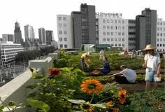www.dakboerin.nl So much space on our roofs! Reduce your consumption and start growing your own food!