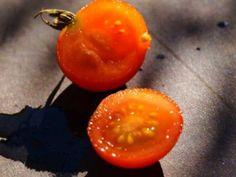 Tomaten säen - leicht gemacht