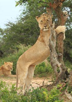 mote en cougar gratis leppavirta