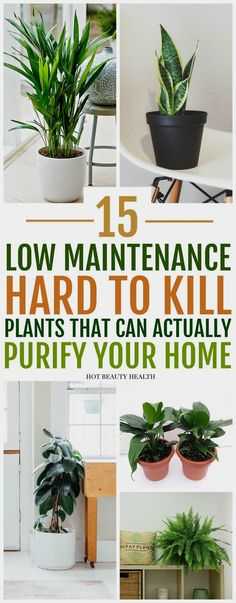 The best air purifying plants that are super low maintenance and hard to kill. ( gerbera daises, snake plants, peace lily, boston ferns, and more) Many need only low light and are also pet safe. Inside Plants, Cool Plants, Small Plants, Green Plants, Inside Garden, Good Plants For Indoors, Growing Plants Indoors, Live Plants, Low Maintenance Indoor Plants