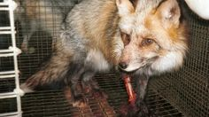"""Hey,  I just signed the petition """"Gap Inc. is selling kangaroo, fox, rabbit, raccoon dog, and mink fur!"""" and wanted to see if you could help by adding your name. Our goal is to reach 75,000 signatures and we need more support."""