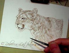 Cougar work in progress, 5 x 7, watercolor on board, ©Rebecca Latham  Hope you…