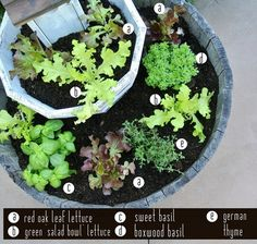 i might just have to do this this year with my lettuce... i have the big planters already!