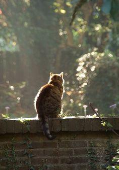 cat on garden wall