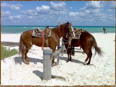 Rancho Baaxal, playa Maroma. México