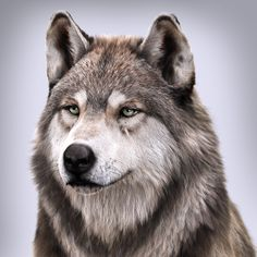 Wolf Portrait (different angle), Massimo Righi – Nami - Space Wolf Images, Wolf Photos, Wolf Pictures, Beautiful Wolves, Animals Beautiful, Tier Wolf, Wolf Craft, Wolf Hybrid, Wolf Spirit Animal