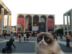 Most importantly, however, Grumpy Cat showed up at Lincoln Center. And hated it.