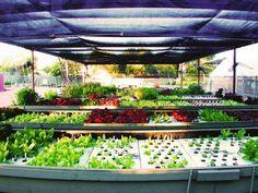 Tucson Aquaponics Project