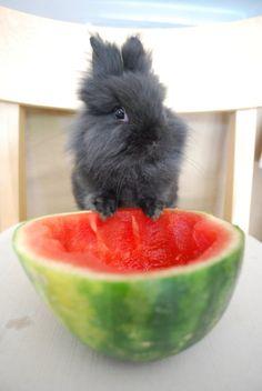 Bunny Enjoys Some Fresh Watermelon - August 16, 2011