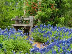 Bench surrounded with bluebonnets in Pollinator Garden. Growing Seeds, Blue Bonnets, Backyard Plants, Landscaping Plants, Texas Gardening, Gardening Tips, Texas Bluebonnets, Native Plants, Landscaping Supplies