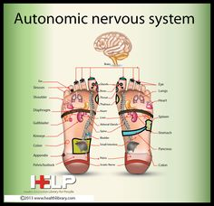 Autonomic Nervous System -- GO SEE THIS PIN BOARD FOR MISC HEALTH INFO