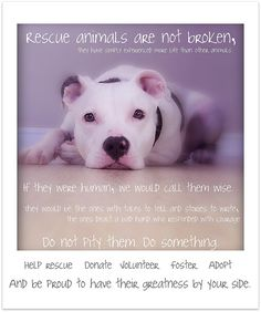 At ISF we want to give these unwanted animals a safe and loving home. How? We are going to build an Animal Sanctuary! http://www.isfoundation.com/campaign/isf-animal-sanctuary    : Rescue animals are not broken by JennyPetunia, via Flickr