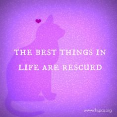 #adopt #rescue #savelives www.nhspca.org