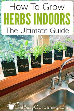How To Grow Herbs Indoors: The Ultimate Guide - Get Busy Gardening - - Indoor herb gardening is fun, but can be challenging. Learn all you need to know in order to be successful in this detailed guide to growing herbs indoors! Herb Garden In Kitchen, Diy Herb Garden, Kitchen Herbs, Herbs Garden, Plants For Kitchen, Herb Garden Planter, Bamboo Garden, Garden Crafts, Garden Ideas