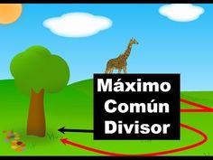 Maximo Comun Divisor Metodo Directo - YouTube