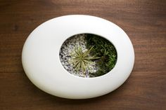 A simple and minimalist design makes this terrarium a must-have.
