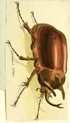 Box 1 - [Lamellicornia] - Biodiversity Heritage Library