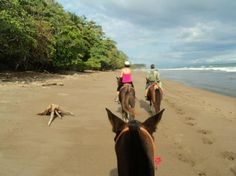 Ario Horse Tours: Ario Horse Tours are so much more that a ride through the jungle. This family run business established themselves over 40 years ago on a typical Costa Rican ranch and equestrian farm. Located in the area known as Bajos de Ario in Manzanillo they help preserve 2 of the major rios with some of the proceeds from the tours by planting trees along the river banks.