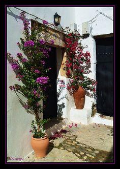 Color in Vejer - Vejer de la Frontera, Cadiz  Spain