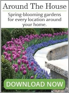 Flower bulbs are an easy way to boost the amount of color in your yard and garden. By choosing bulbs that flower at different times during the growing season, you can be sure to always have something beautiful coming into bloom. Our new bloom time chart (shown below) lets you see at a glance when each type of flower bulb comes