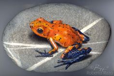 Dendrobates - acrylic on rock - cm. 30   Rockpainting Art by Roberto Rizzo   www.robertorizzo.com #frogs #fineart #illusion #wildlifeart #rockpainting #paintedstones