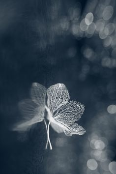 Ballerina by Shihya Kowatari on Bokashi, Macro Shots, Leaf Art, Nature Images, Light And Shadow, Great Pictures, Life Is Beautiful, Monochrome, Photos