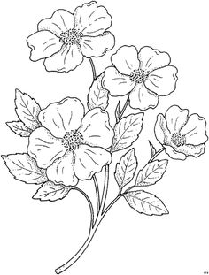 Coloring Sheets Hibiscus Flowers For Preschool See More Blumengemischt HFB 0033 530x700 61Kb